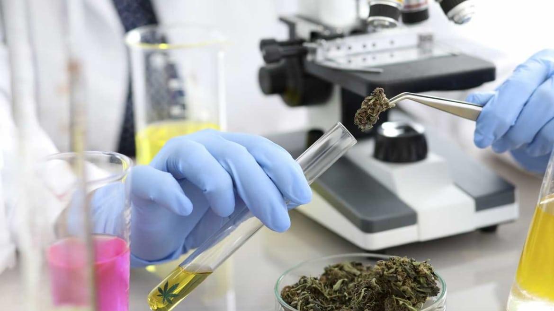 Ricerca in campo medicinale