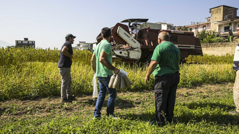 Coltivazione agricola